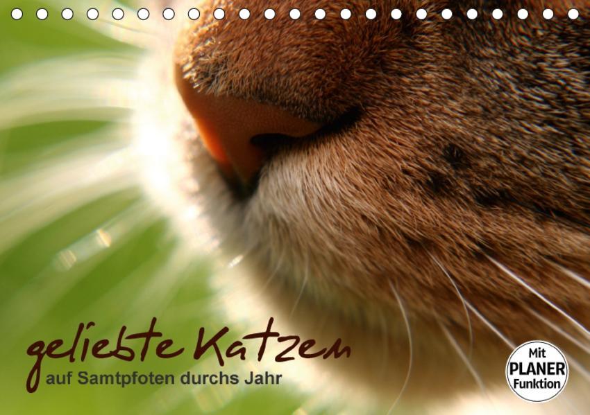 geliebte Katzen - auf Samtpfoten durchs Jahr (Tischkalender 2017 DIN A5 quer) - Coverbild