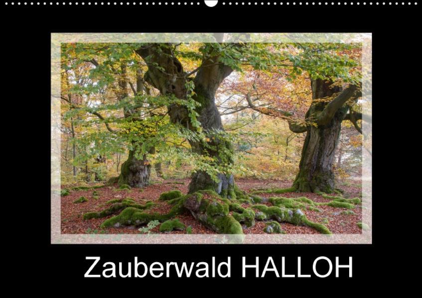 Zauberwald HALLOH (Wandkalender 2017 DIN A2 quer) - Coverbild
