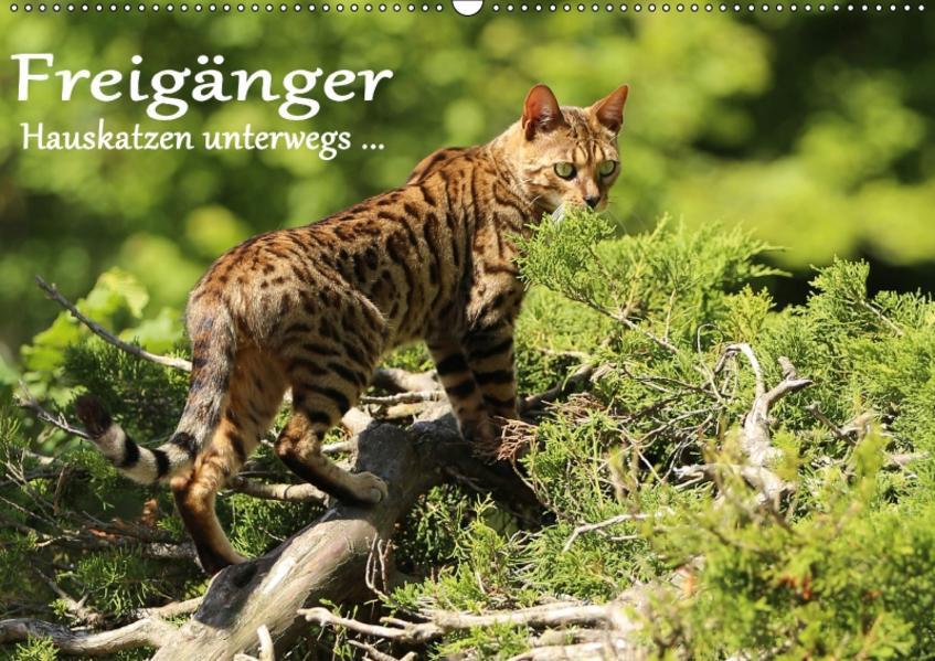 Freigänger - Hauskatzen unterwegs (Wandkalender 2017 DIN A2 quer) - Coverbild