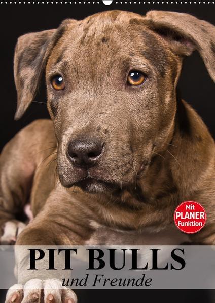 Pit Bulls und Freunde (Wandkalender 2017 DIN A2 hoch) - Coverbild