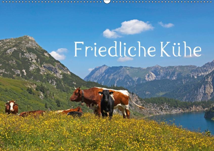 Friedliche Kühe (Wandkalender 2017 DIN A2 quer) - Coverbild