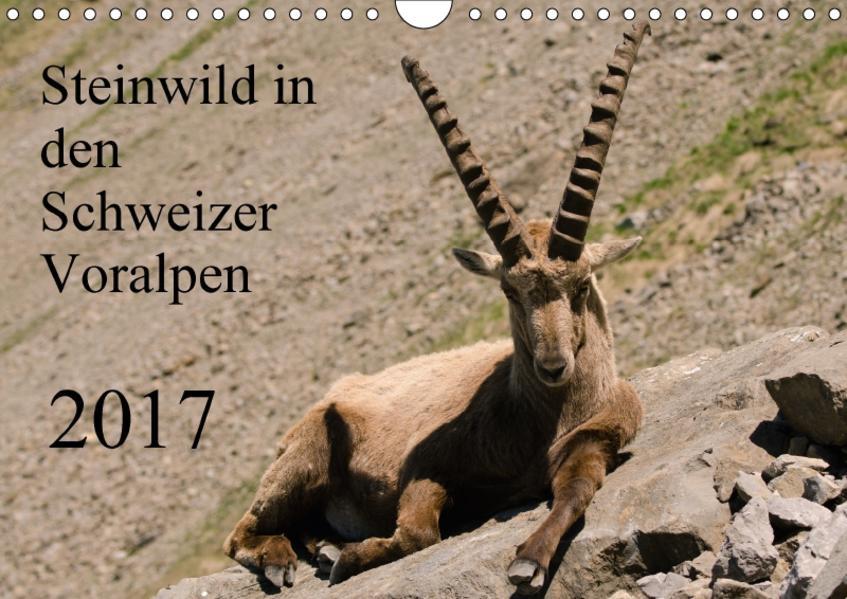 Steinwild in den Schweizer Voralpen (Wandkalender 2017 DIN A4 quer) - Coverbild