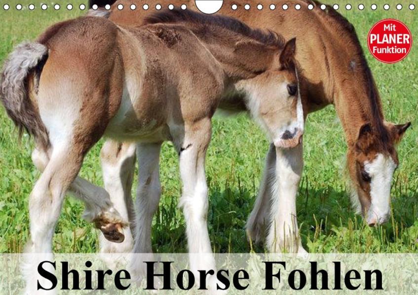 Shire Horse Fohlen (Wandkalender 2017 DIN A4 quer) - Coverbild