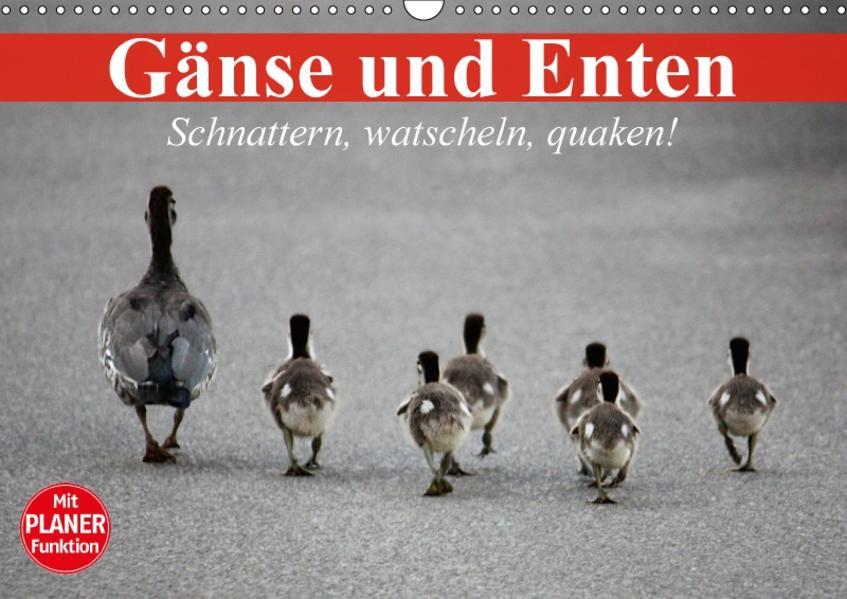 Gänse und Enten. Schnattern, watscheln, quaken! (Wandkalender 2017 DIN A3 quer) - Coverbild