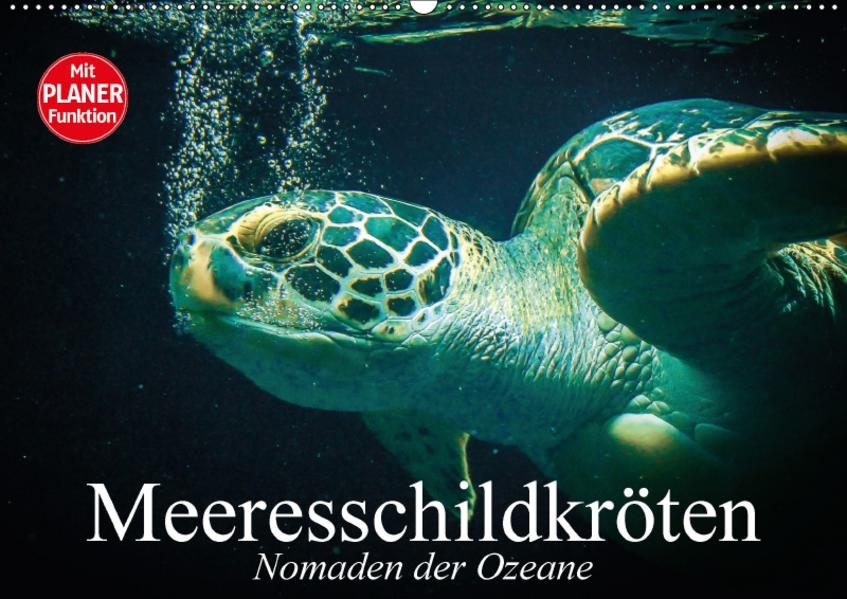 Meeresschildkröten. Nomaden der Ozeane (Wandkalender 2017 DIN A2 quer) - Coverbild