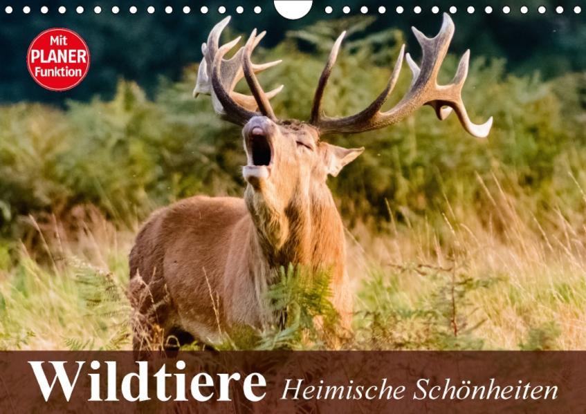 Wildtiere. Heimische Schönheiten (Wandkalender 2017 DIN A4 quer) - Coverbild