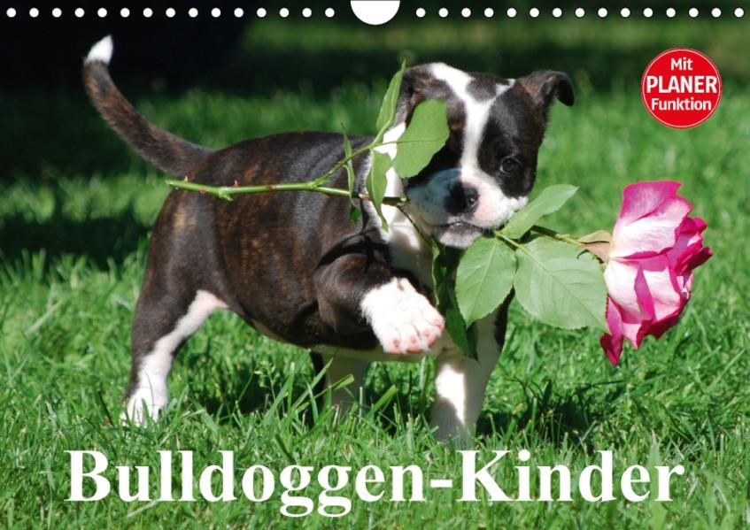 Bulldoggen-Kinder (Wandkalender 2017 DIN A4 quer) - Coverbild