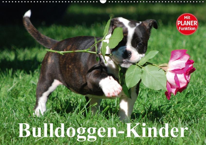 Bulldoggen-Kinder (Wandkalender 2017 DIN A2 quer) - Coverbild