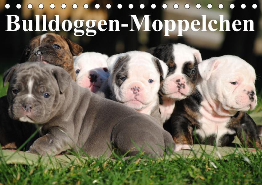 Bulldoggen-Moppelchen (Tischkalender 2017 DIN A5 quer) - Coverbild