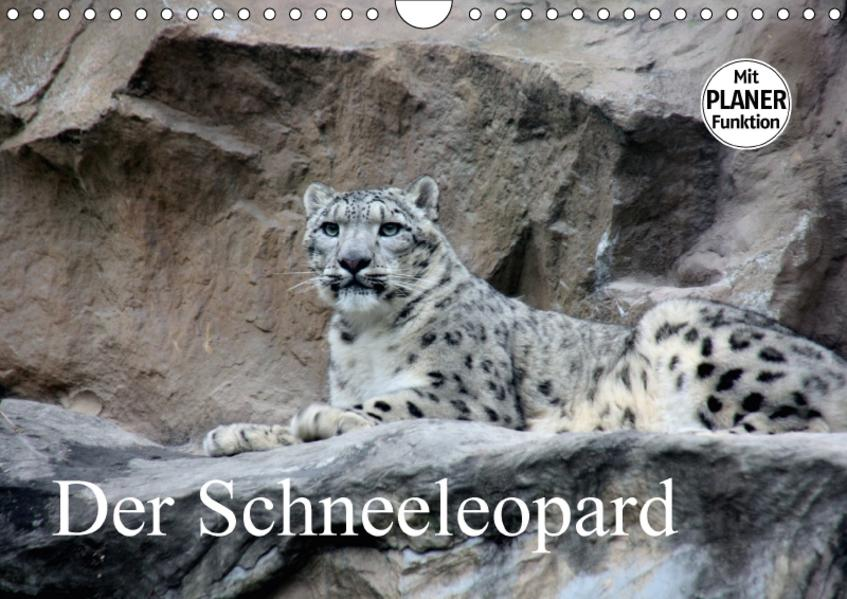 Der Schneeleopard (Wandkalender 2017 DIN A4 quer) - Coverbild