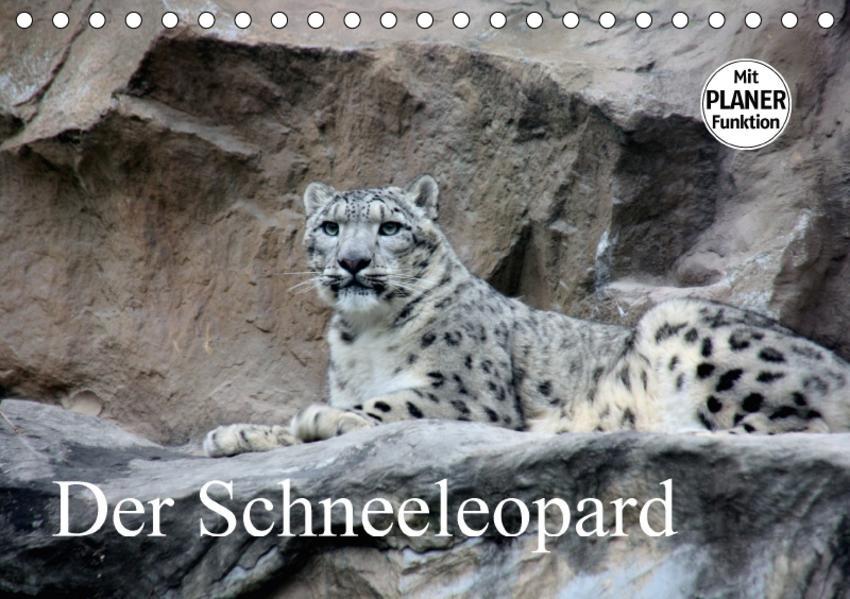 Der Schneeleopard (Tischkalender 2017 DIN A5 quer) - Coverbild