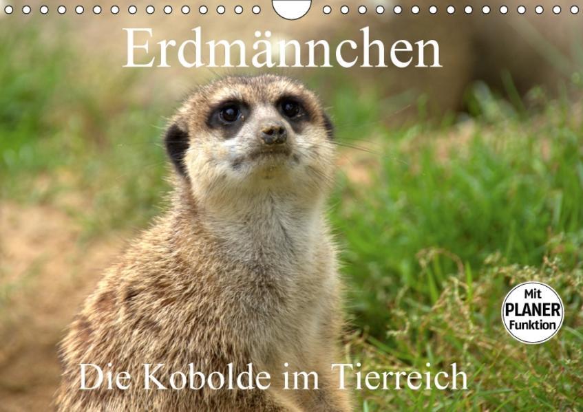 Erdmännchen - Die Kobolde im Tierreich (Wandkalender 2017 DIN A4 quer) - Coverbild