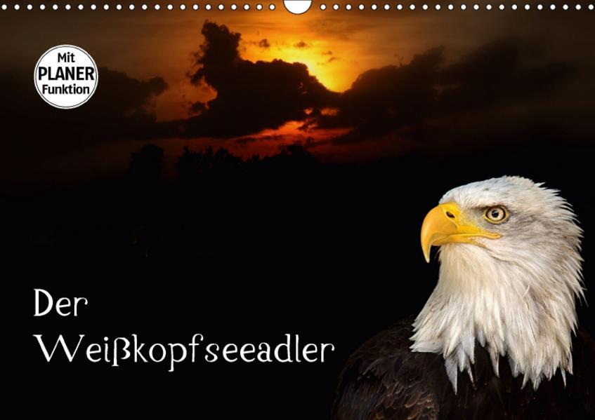 Der Weißkopfseeadler (Wandkalender 2017 DIN A3 quer) - Coverbild