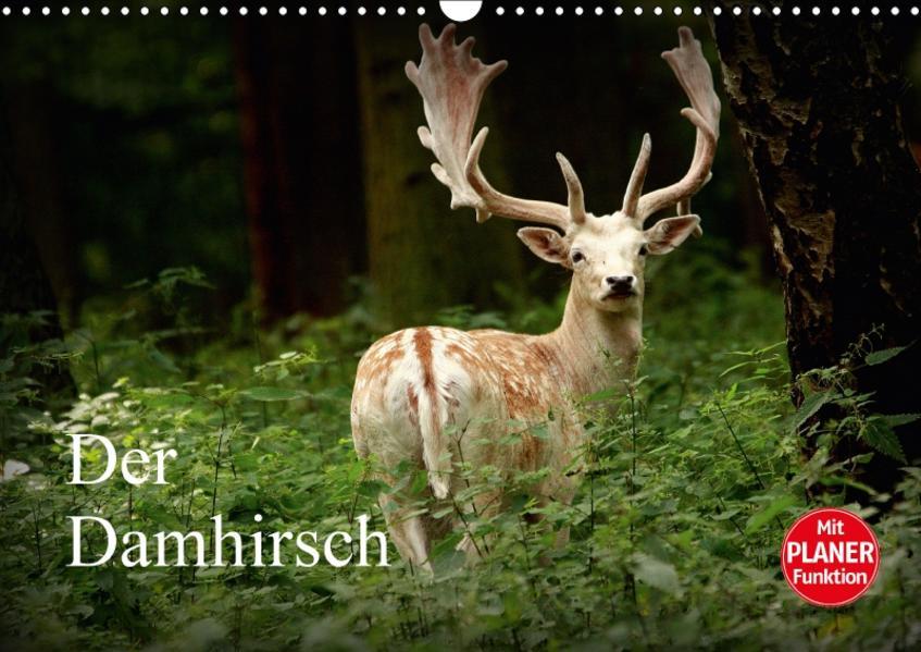 Der Damhirsch (Wandkalender 2017 DIN A3 quer) - Coverbild