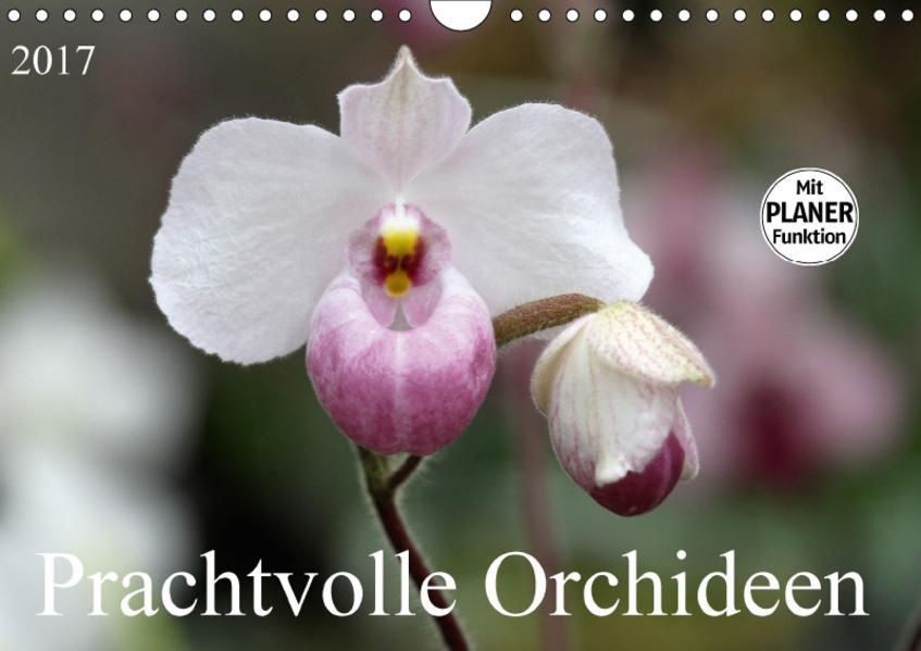 Prachtvolle Orchideen (Wandkalender 2017 DIN A4 quer) - Coverbild