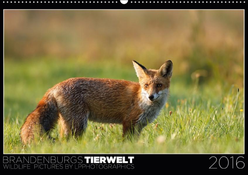 Brandenburgs Tierwelt (Wandkalender 2017 DIN A2 quer) - Coverbild