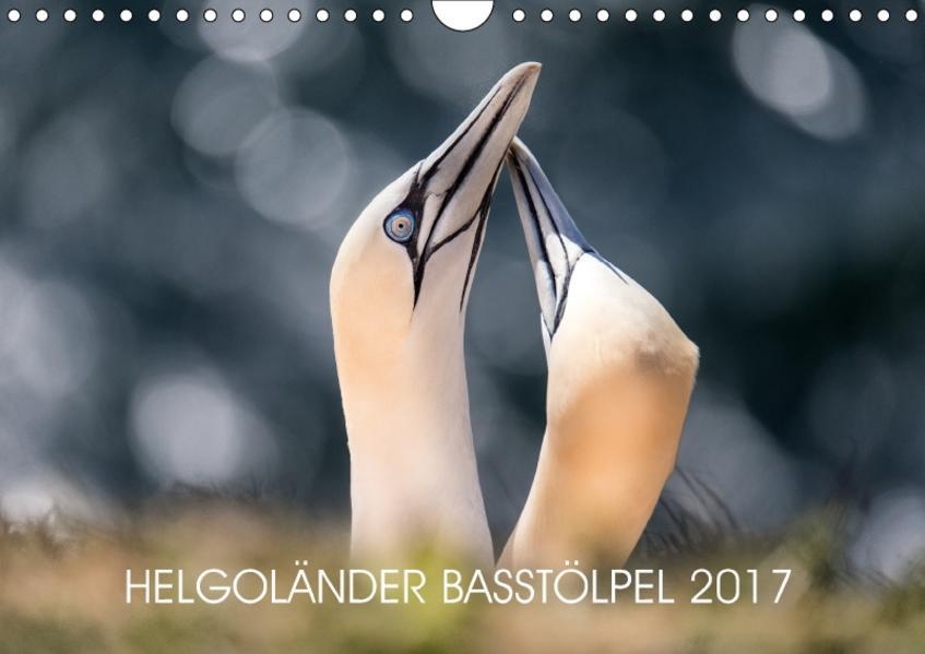 Helgoländer Basstölpel 2017 (Wandkalender 2017 DIN A4 quer) - Coverbild