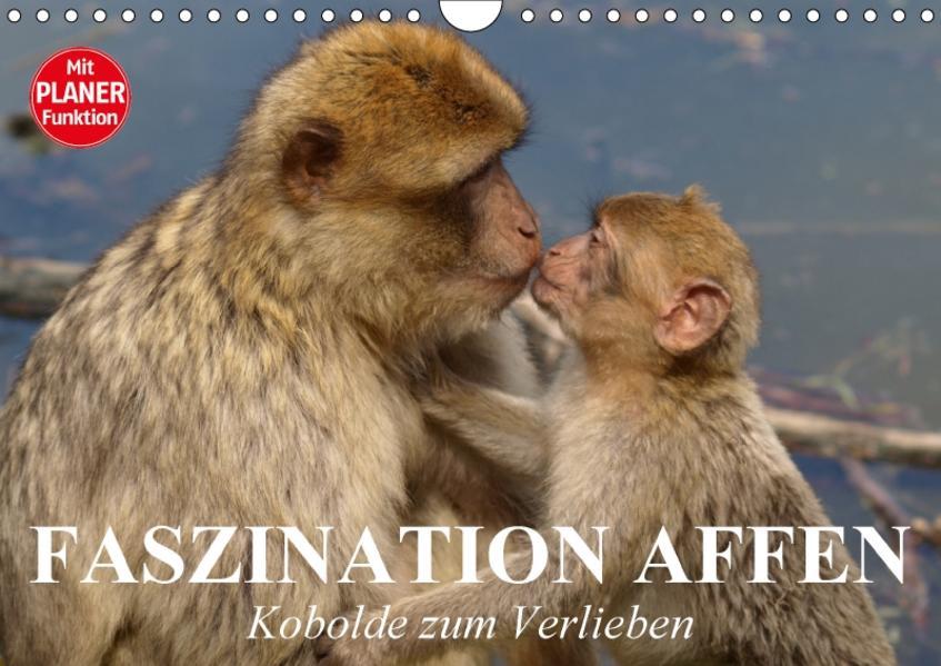 Faszination Affen. Kobolde zum Verlieben (Wandkalender 2017 DIN A4 quer) - Coverbild