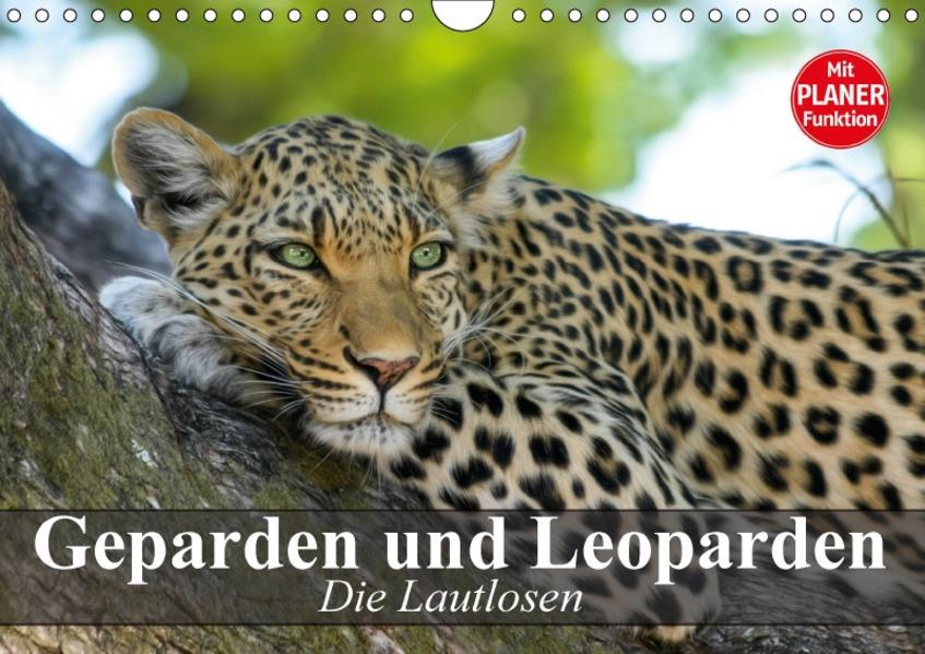 Die Lautlosen. Geparden und Leoparden (Wandkalender 2017 DIN A4 quer) - Coverbild