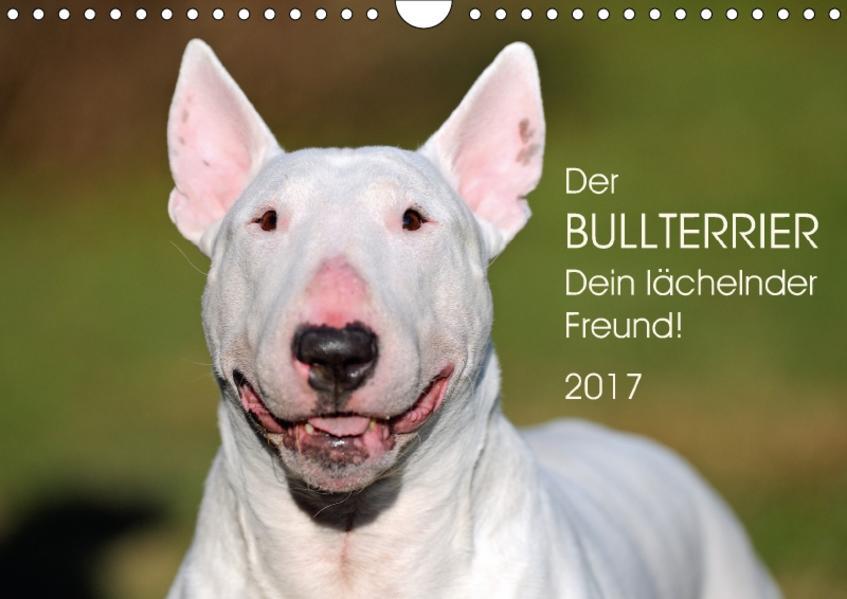 Der Bullterrier, Dein lächelnder Freund!AT-Version  (Wandkalender 2017 DIN A4 quer) - Coverbild