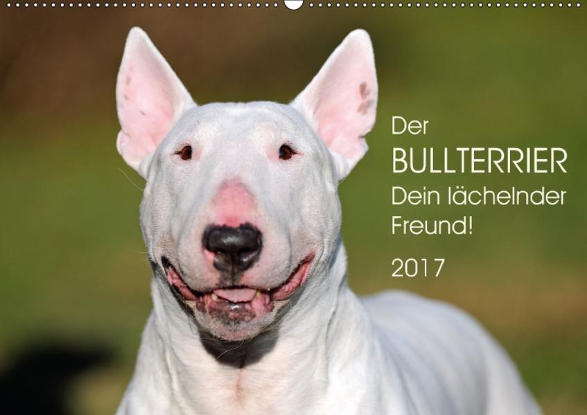 Der Bullterrier, Dein lächelnder Freund!AT-Version  (Wandkalender 2017 DIN A2 quer) - Coverbild