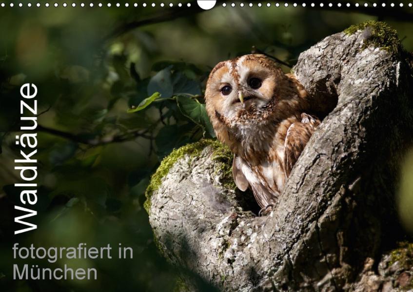 Waldkäuze, fotografiert in München (Wandkalender 2017 DIN A3 quer) - Coverbild