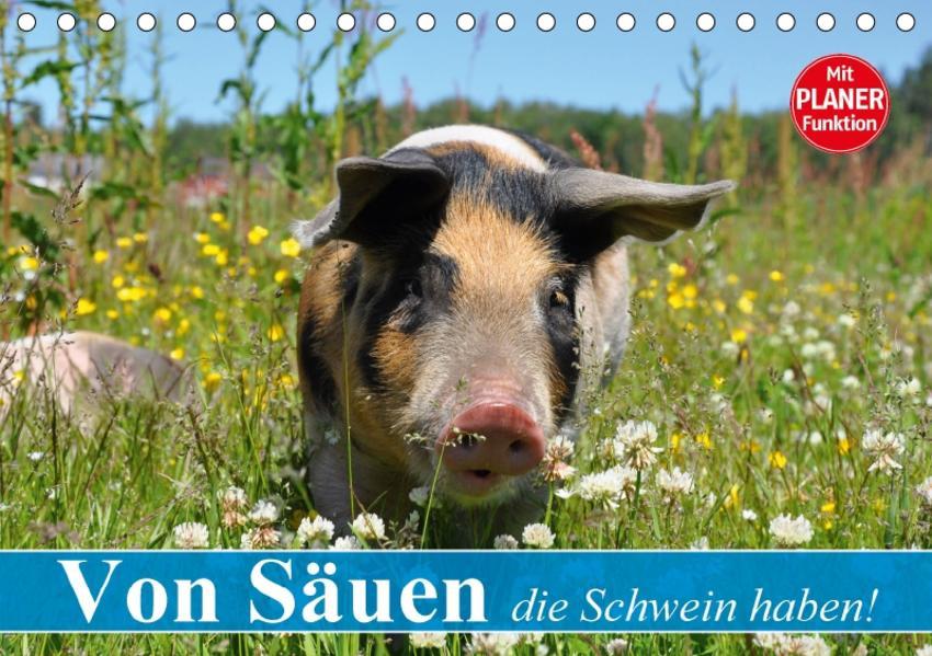 Von Säuen die Schwein haben! (Tischkalender 2017 DIN A5 quer) - Coverbild