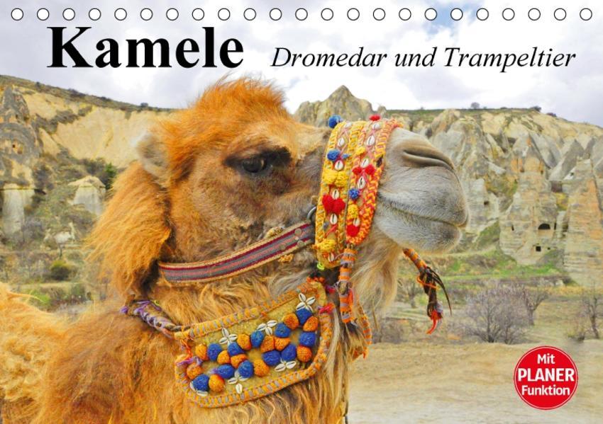 Kamele. Dromedar und Trampeltier (Tischkalender 2017 DIN A5 quer) - Coverbild