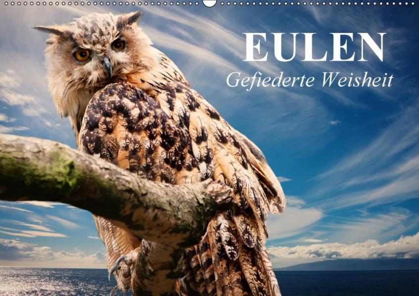 Eulen. Gefiederte Weisheit (Wandkalender 2017 DIN A2 quer) - Coverbild