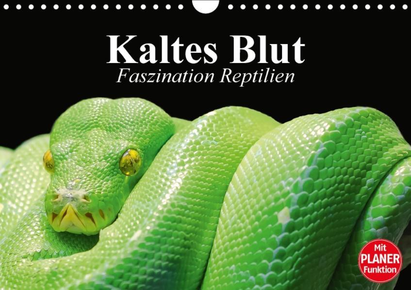 Kaltes Blut. Faszination Reptilien (Wandkalender 2017 DIN A4 quer) - Coverbild
