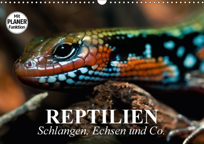 Reptilien. Schlangen, Echsen und Co. (Wandkalender 2017 DIN A3 quer) - Coverbild