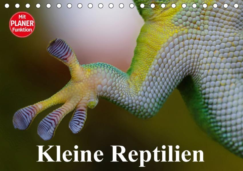 Kleine Reptilien (Tischkalender 2017 DIN A5 quer) - Coverbild