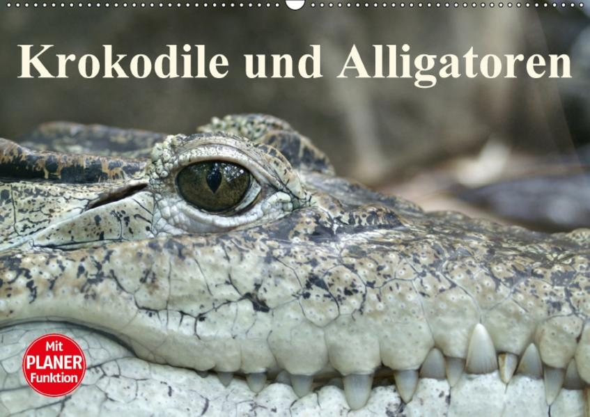 Krokodile und Alligatoren (Wandkalender 2017 DIN A2 quer) - Coverbild