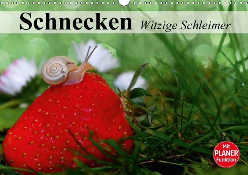 Schnecken. Witzige Schleimer (Wandkalender 2017 DIN A3 quer) - Coverbild