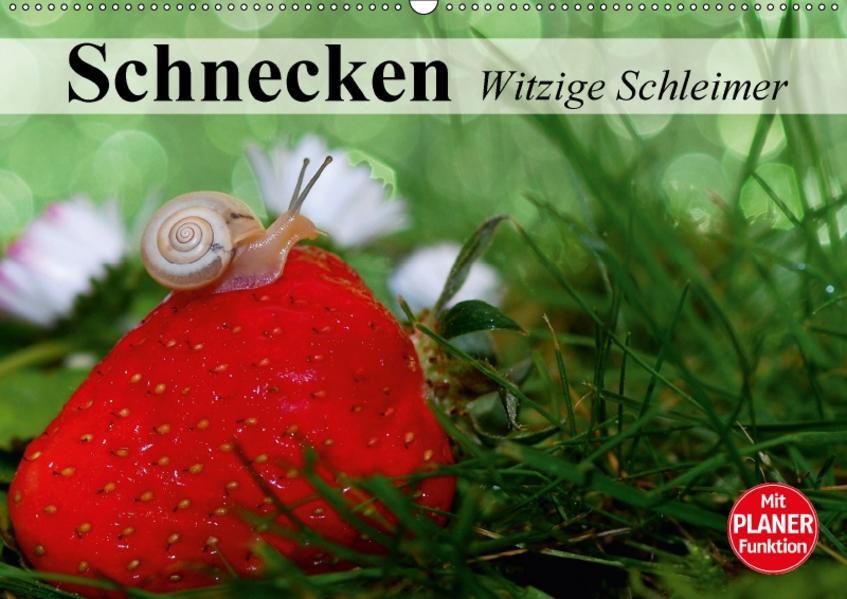Schnecken. Witzige Schleimer (Wandkalender 2017 DIN A2 quer) - Coverbild