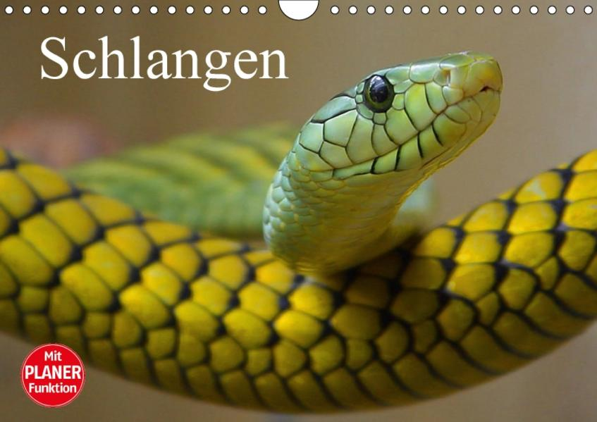 Schlangen (Wandkalender 2017 DIN A4 quer) - Coverbild