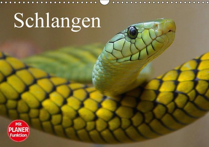 Schlangen (Wandkalender 2017 DIN A3 quer) - Coverbild