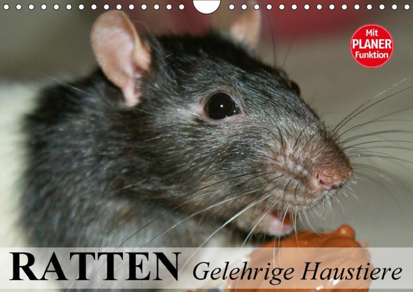 Ratten. Gelehrige Haustiere (Wandkalender 2017 DIN A4 quer) - Coverbild
