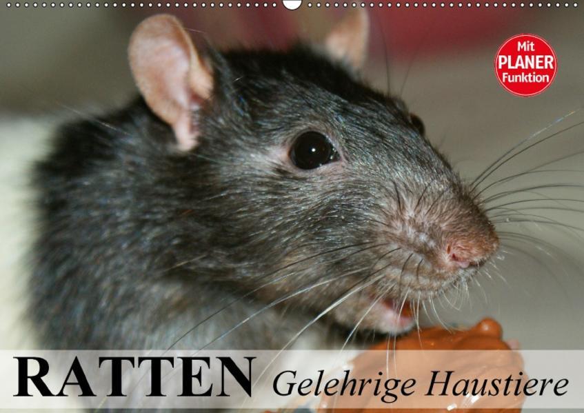 Ratten. Gelehrige Haustiere (Wandkalender 2017 DIN A2 quer) - Coverbild