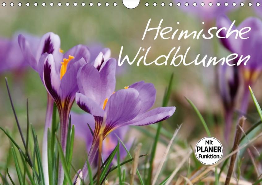 Heimische Wildblumen (Wandkalender 2017 DIN A4 quer) - Coverbild