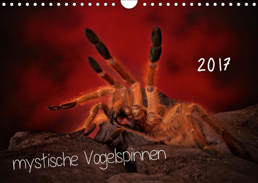 Mystische Vogelspinnen (Wandkalender 2017 DIN A4 quer) - Coverbild