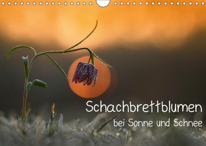 Schachbrettblumen bei Sonne und Schnee (Wandkalender 2017 DIN A4 quer) - Coverbild