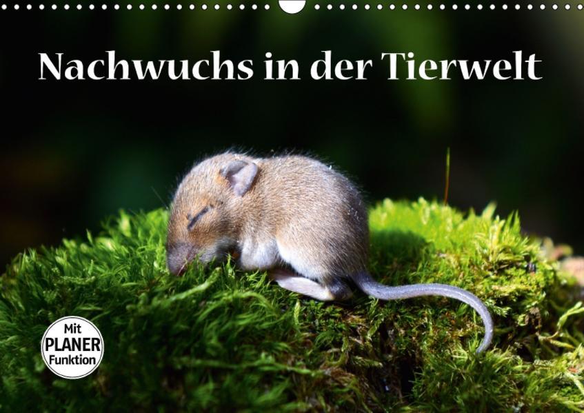Nachwuchs in der Tierwelt (Wandkalender 2017 DIN A3 quer) - Coverbild