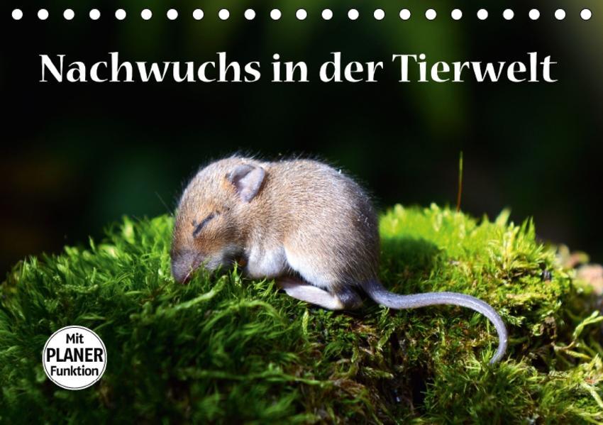 Nachwuchs in der Tierwelt (Tischkalender 2017 DIN A5 quer) - Coverbild