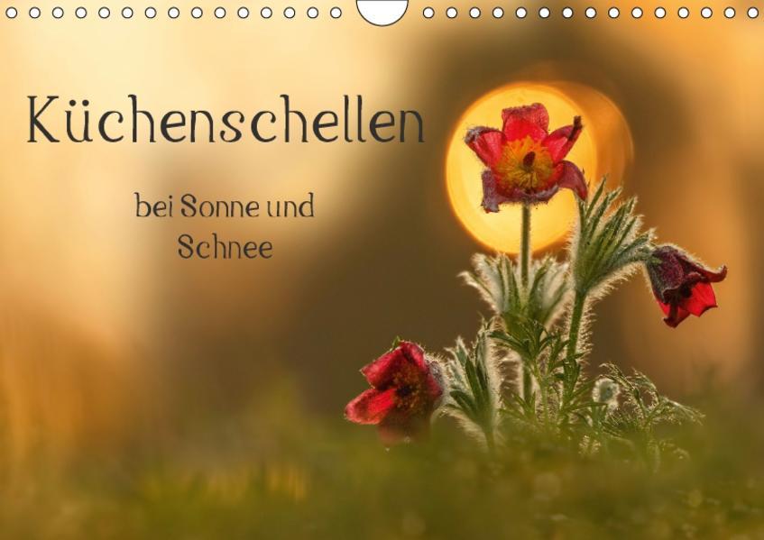 Küchenschellen bei Sonne und Schnee (Wandkalender 2017 DIN A4 quer) - Coverbild