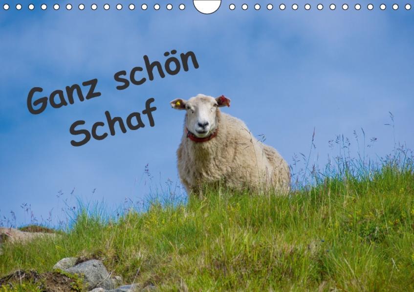 Ganz schön Schaf (Wandkalender 2017 DIN A4 quer) - Coverbild