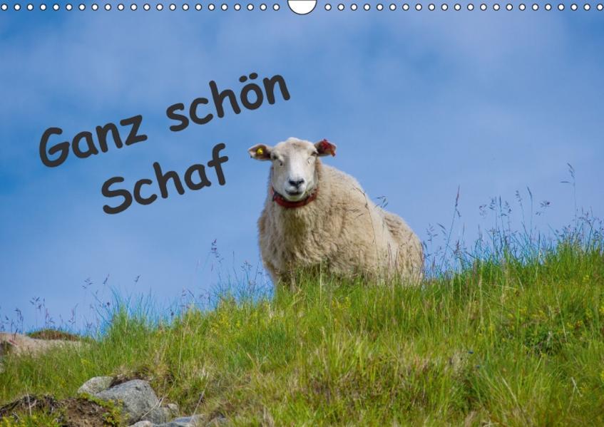 Ganz schön Schaf (Wandkalender 2017 DIN A3 quer) - Coverbild