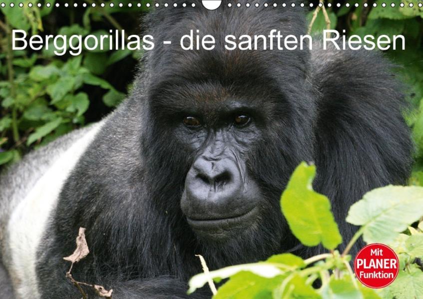 Berggorillas - die sanften Riesen (Wandkalender 2017 DIN A3 quer) - Coverbild