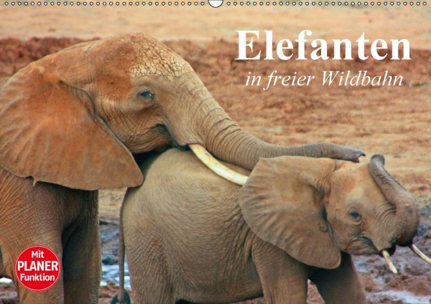 Elefanten in freier Wildbahn (Wandkalender 2017 DIN A2 quer) - Coverbild