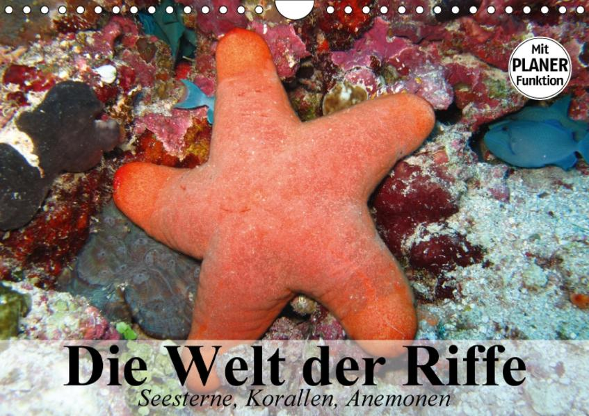 Die Welt der Riffe. Seesterne, Korallen, Anemonen (Wandkalender 2017 DIN A4 quer) - Coverbild
